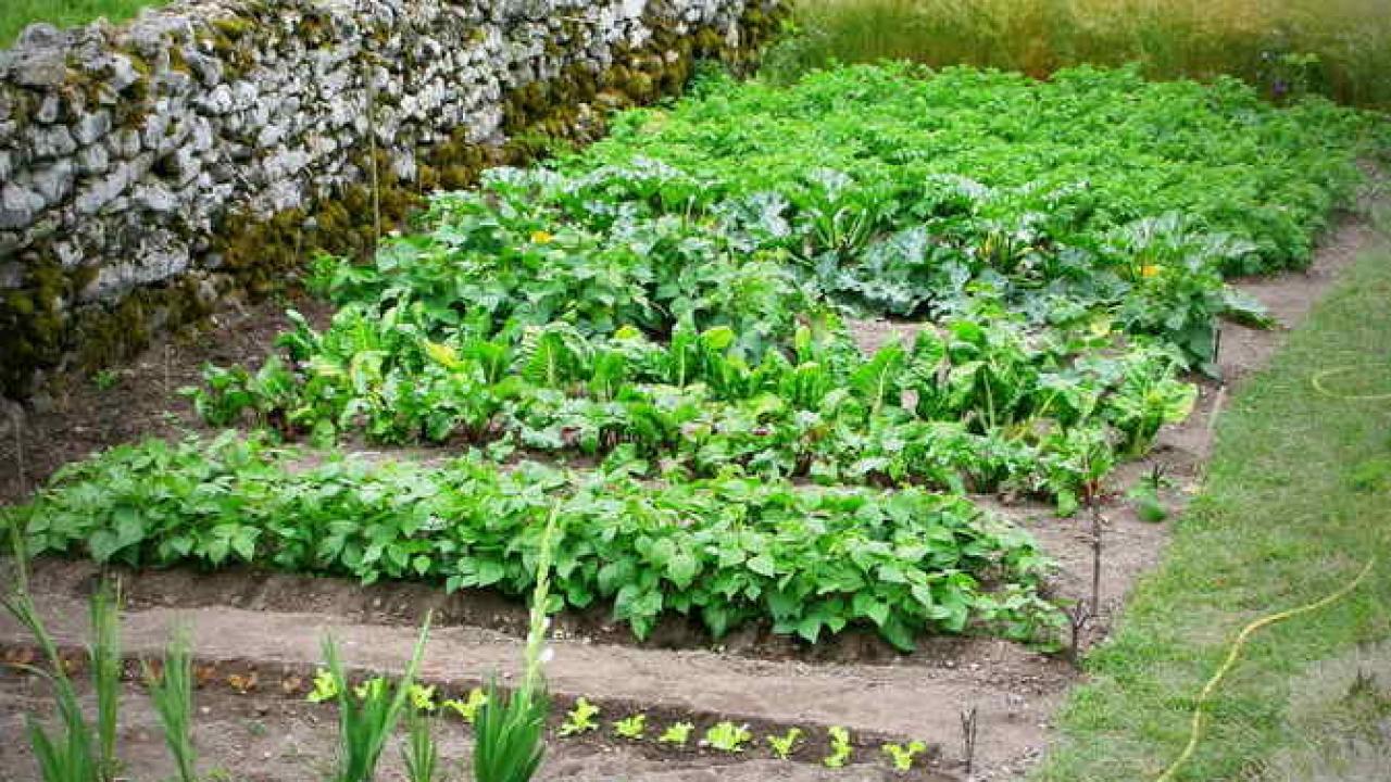 Le Jardin Potager En Janvier 10 légumes faciles à cultiver pour potager débutant