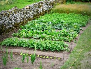 potager facile legumes