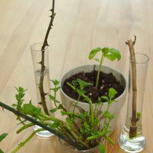 Propagating through cuttings, guiding principles