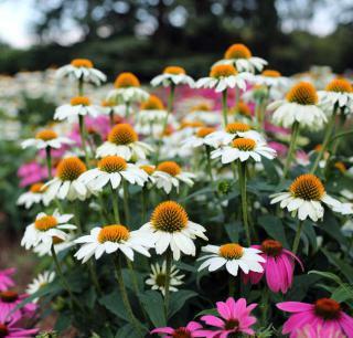 jardin naturel sauvage plantes