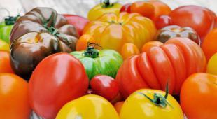tomate varietes