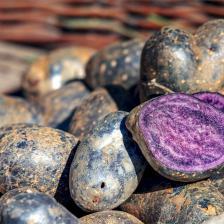 Vitelotte, or black vitelotte, the China truffle