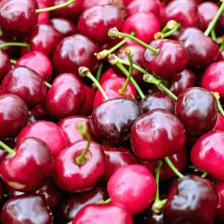 Bigarreau cherry tree, the ultimate cherry