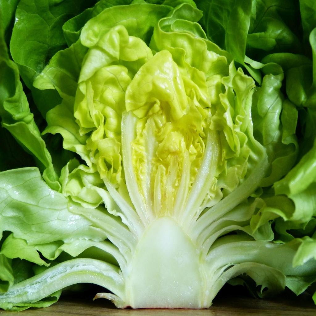 Lettuce health benefits and therapeutic value