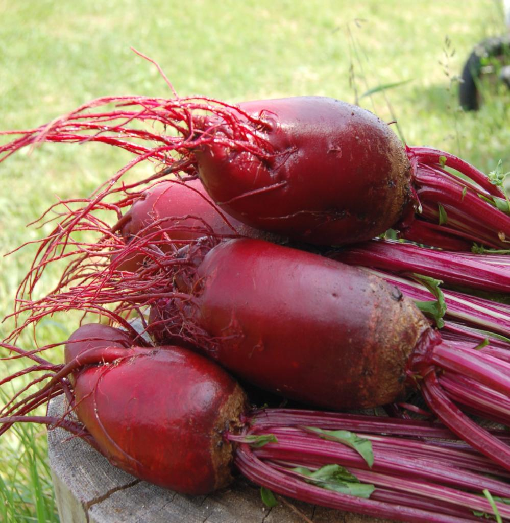 Six fat and juicy red beet just harvested on a wood table.
