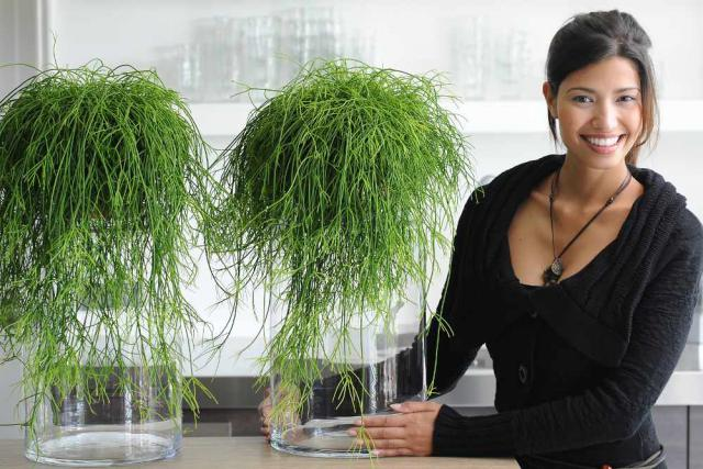 Two bunches of rhipsalis make for very trendy plants with a cute woman presenting them.