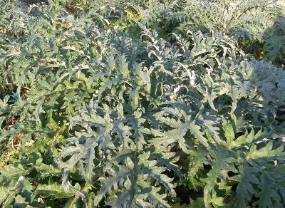 Octobre-novembre : que planter au potager