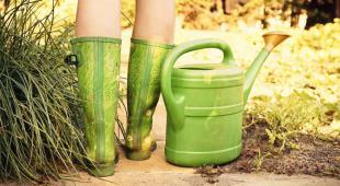 urine jardin engrais