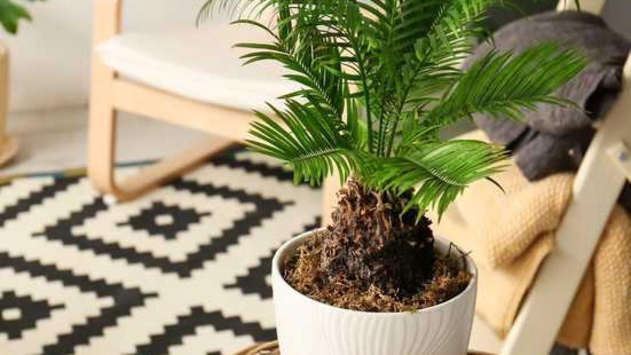 Quelle Plante Mettre Dans Un Grand Pot Exterieur cycas : plantation et conseils d'entretien