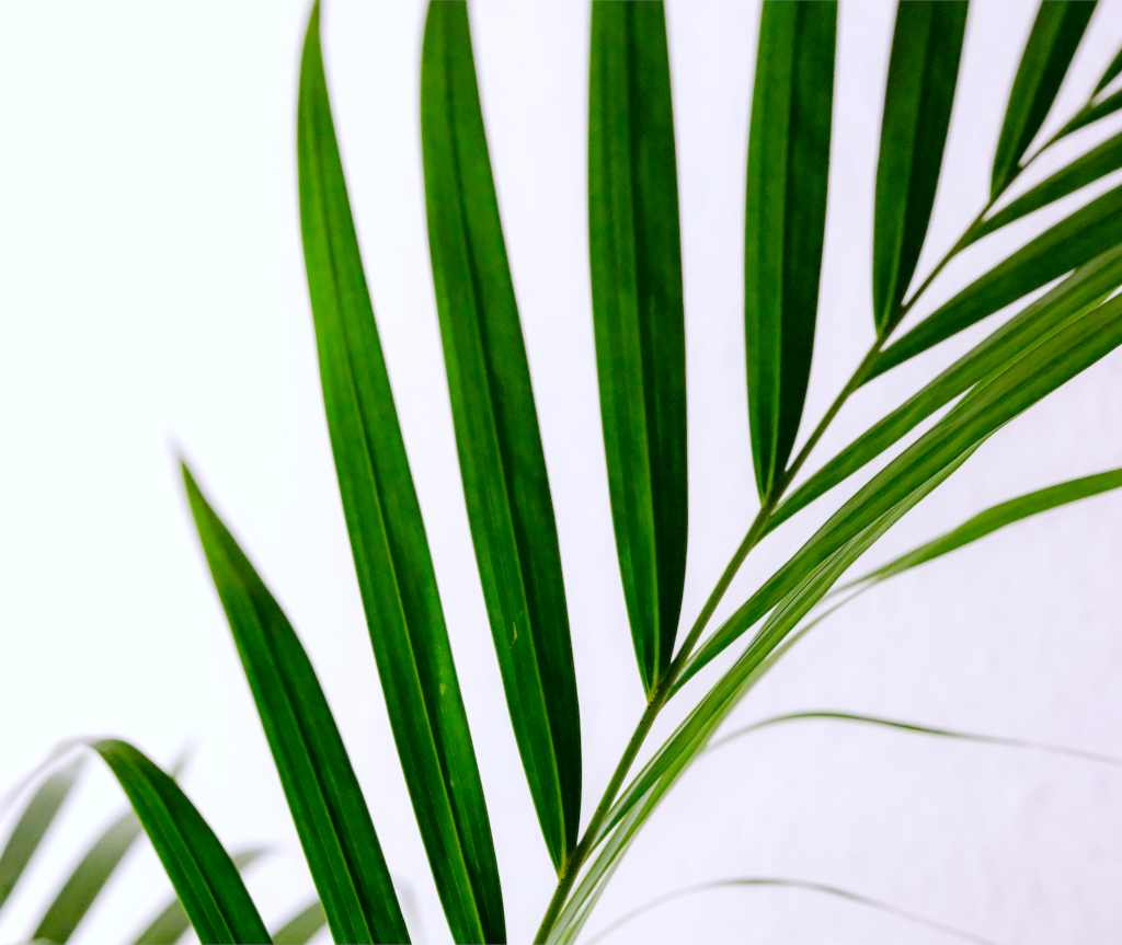 Air purifying indoor plants – part 2 of 2