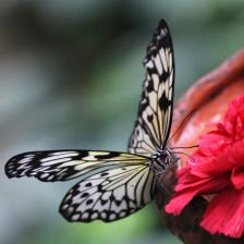 Attracting butterflies with plants and flowers