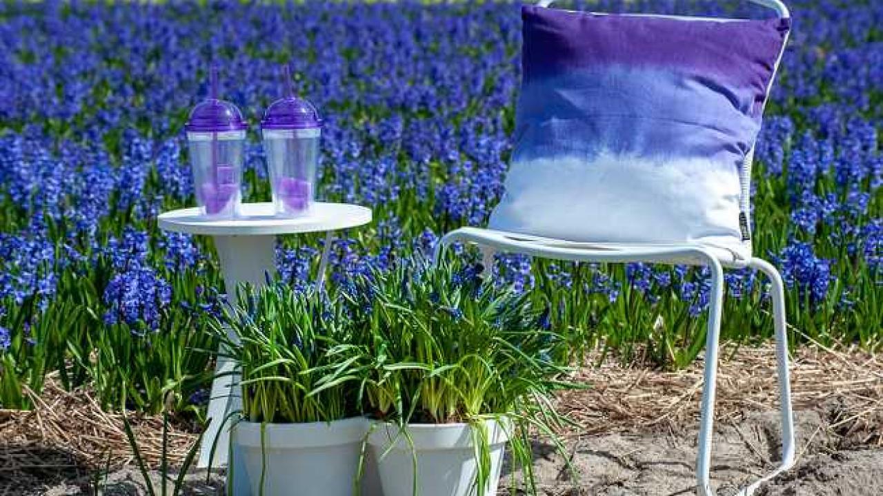 Fleur De Sous Bois Bleue top 8 des fleurs de couleur bleue au jardin