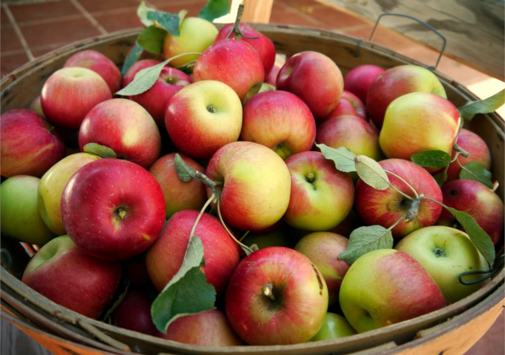Increase fruit harvest - a basket of apples.