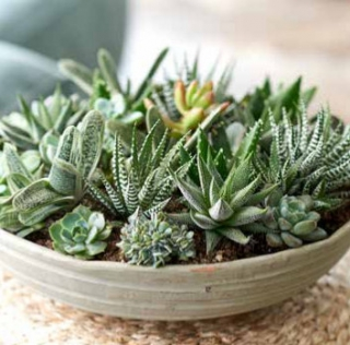 plante grasse deco design