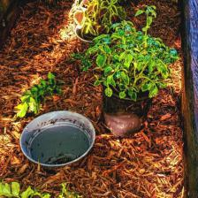 Pot-in-pot technique for easy annuals
