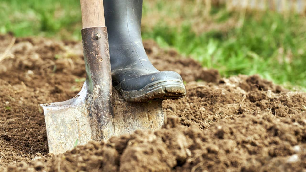 Quoi Planter Dans Une Terre Argileuse terre argileuse : l'ameliorer