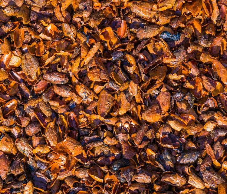 cacao paillage