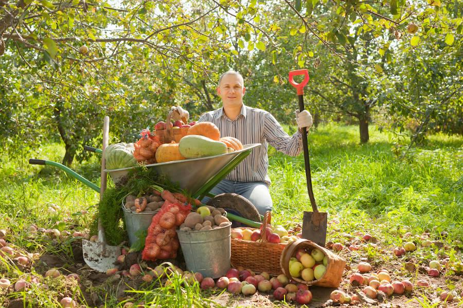 memo travaux automne jardin potager verger