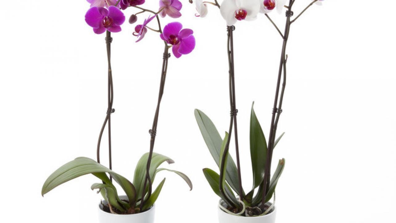 Comment S Occuper D Un Orchidée orchidée : conseils et astuces, entretien et floraison