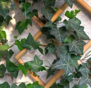 plantes en hiver