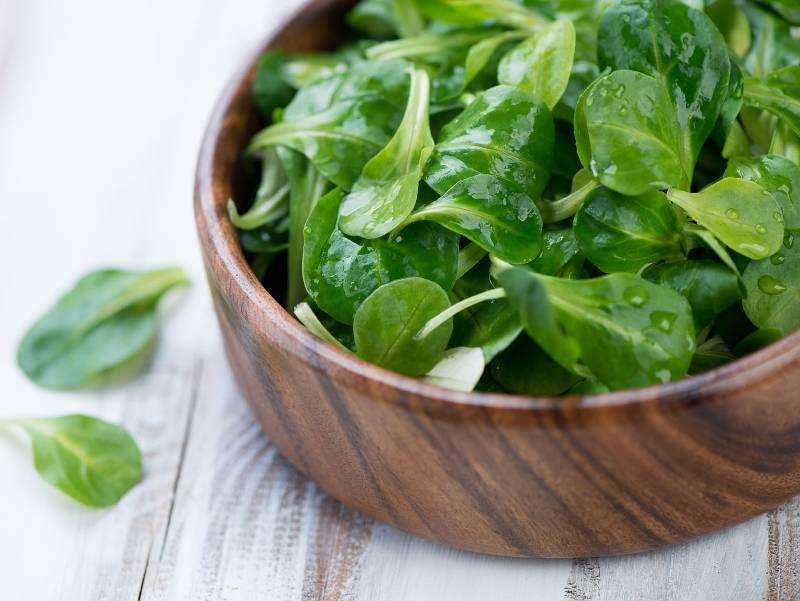 variete salade saison