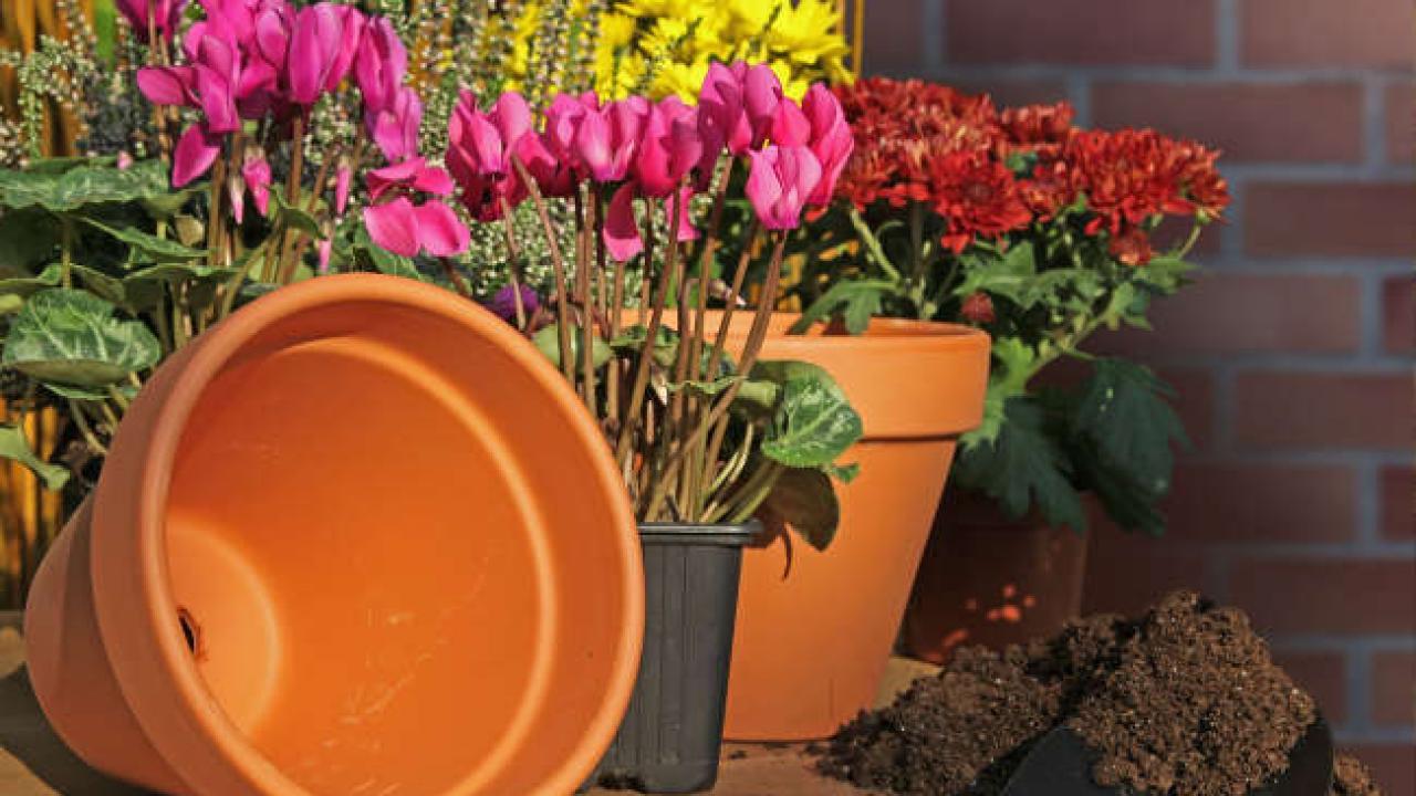 Plantes Pour Terrasse Sud Est les fleurs, arbustes et plantes d'hiver pour jardinière