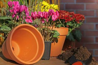 jardiniere hiver fleur