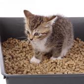 litiere naturelle pour chat