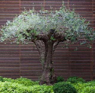 olivier deco tendance