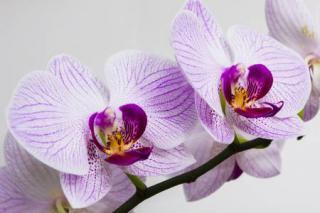 orchidee en hiver