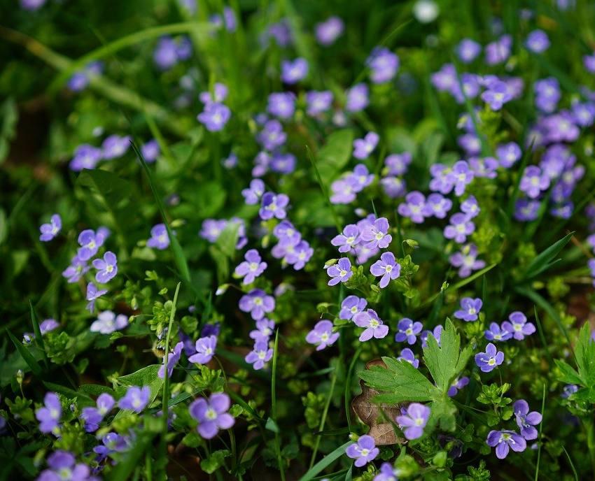 veronica fleur veronique