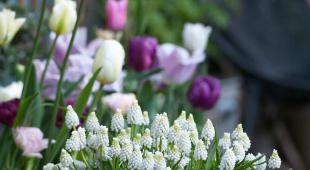 fleurs printemps hiver