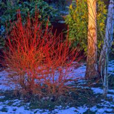 jardin hiver colore