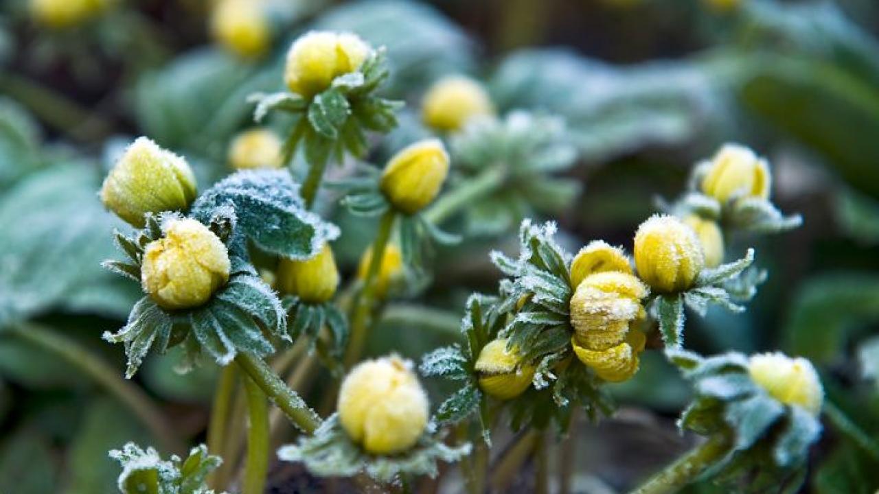 Le Jardin Potager En Janvier jardinage en janvier : travaux et conseils