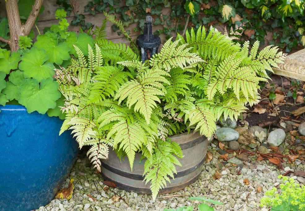 plantes pour balcon hiver