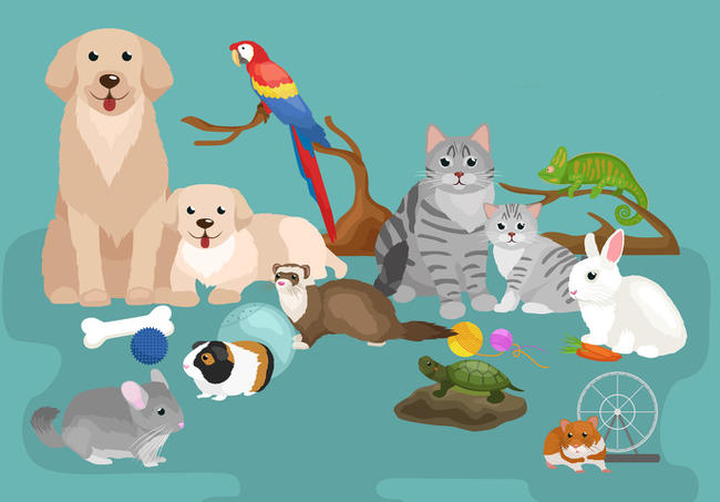 animaux compagnie conseil