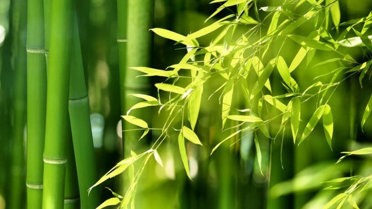 Plante Exterieur Qui Aime L Eau bambou : plantation, arrosage et conseils d'entretien