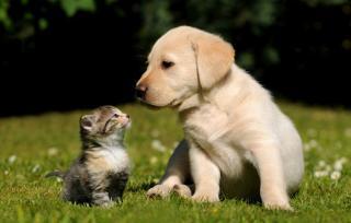 chat-et-chien budget
