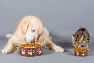 chien chat budget nourriture
