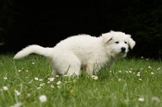 proprete chiot chien