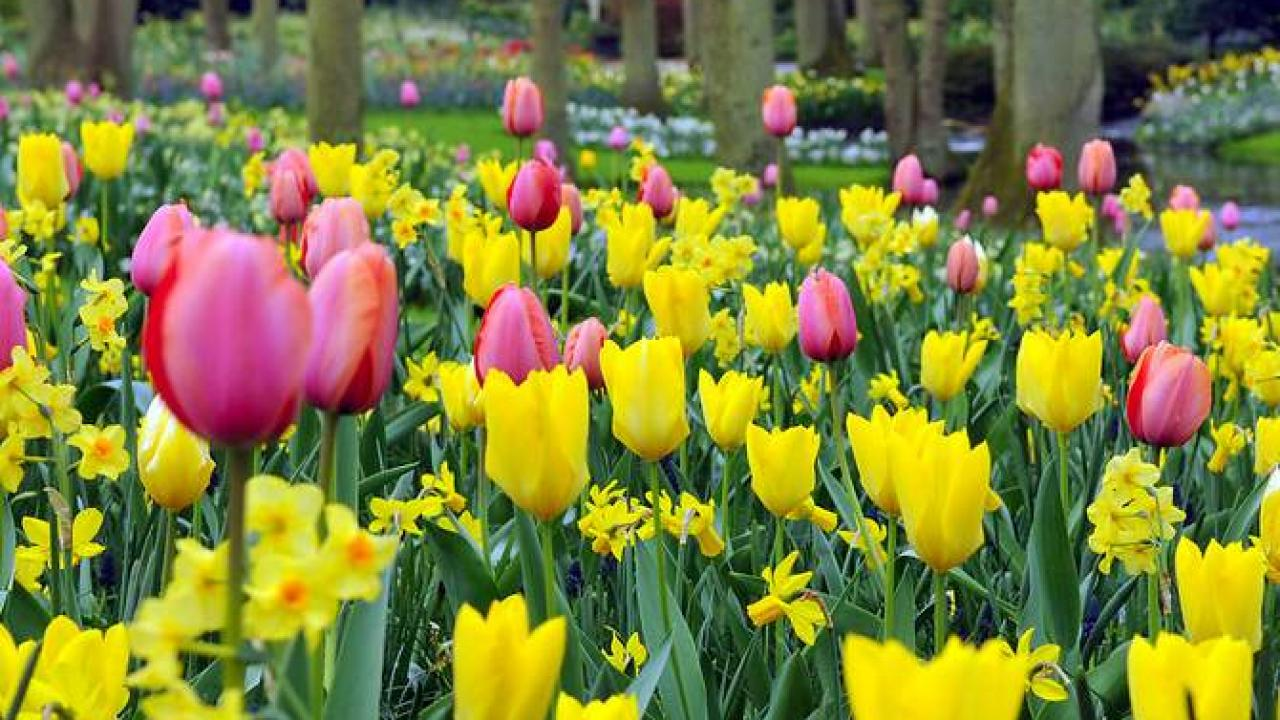 100 Fantastique Conseils Planter Des Tulipes En Novembre