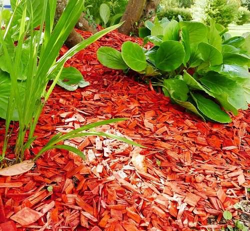 Choisir son paillage en focntion des plantes du jardin et du potager