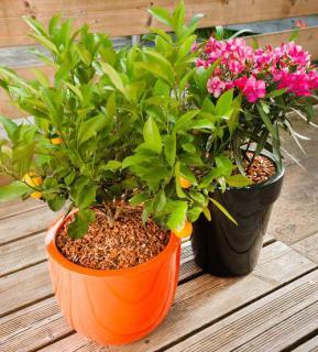 paillage plante en pot