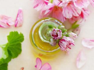 Pelargonium bienfaits