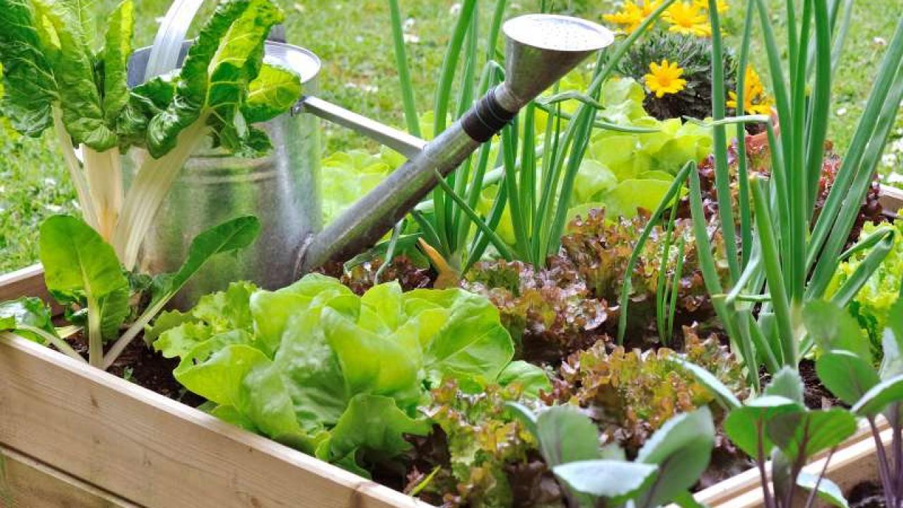 Fabriquer Potager Carré En Bois 5 conseils pour réussir son potager en carré au jardin