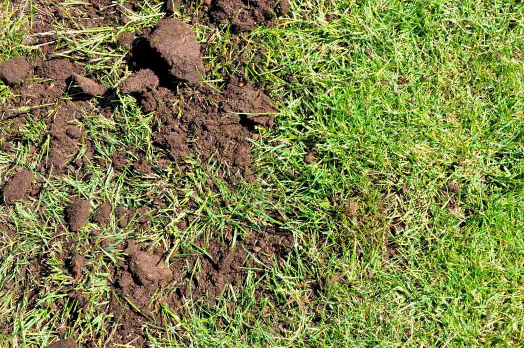 Topdress your lawn for a lush, thick, neat result!