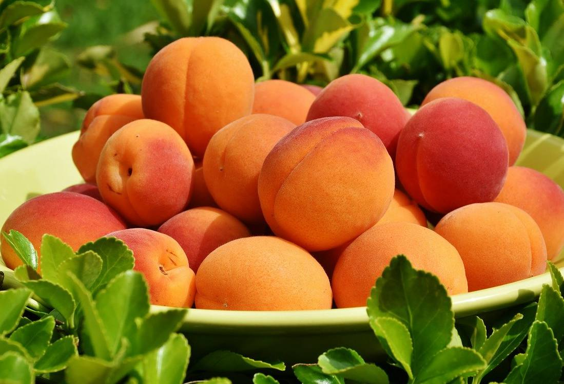 Abricot bienfaits