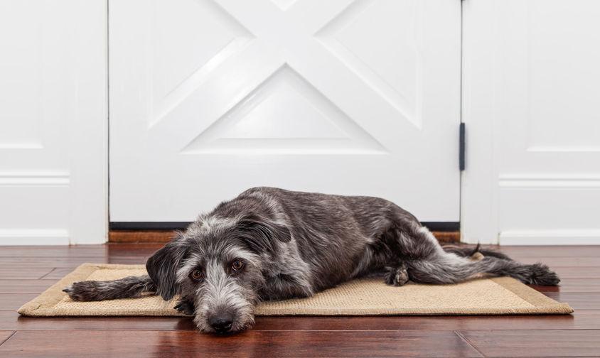anxiete separation chien