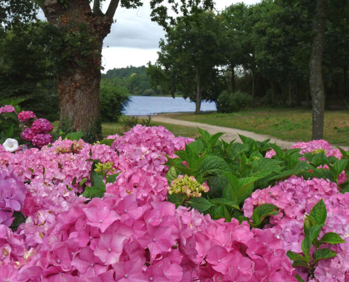 hortensia ploermel