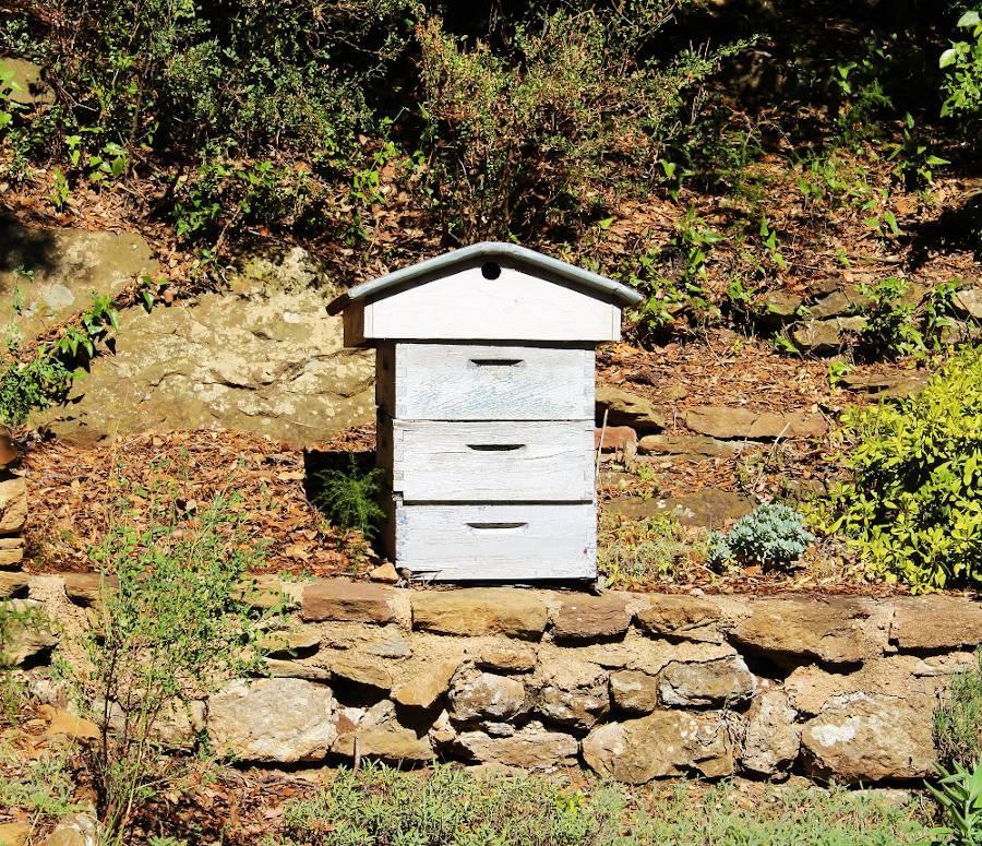 Avoir une ruche dans son jardin